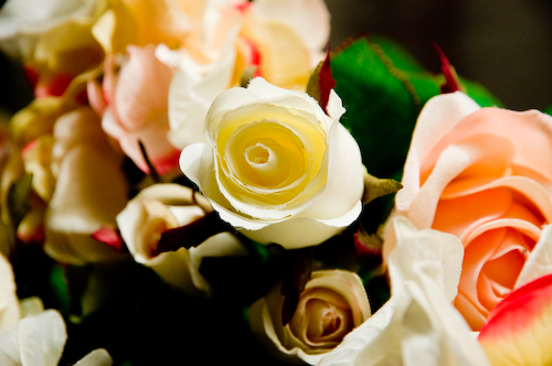 hibiscus-353